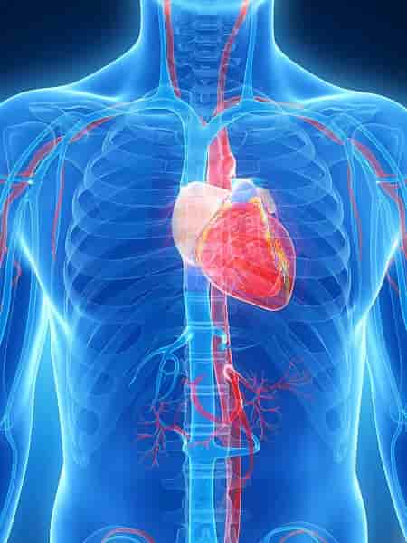 The amazing facts about where the heart is located will simply blow your mind!