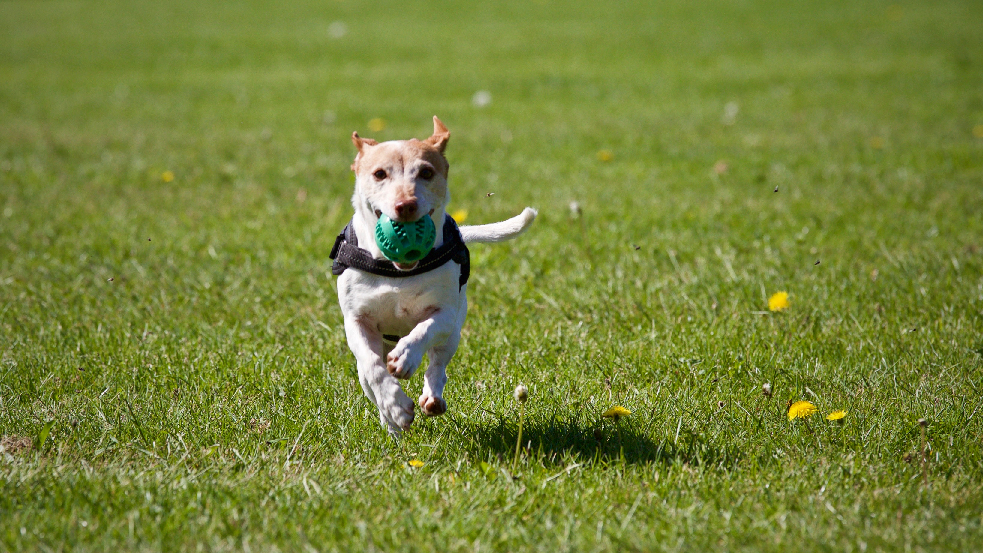 Best Weighted Vest for Dogs 2018 – The Buyer's Guide